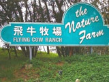 Flying Cow Ranch
